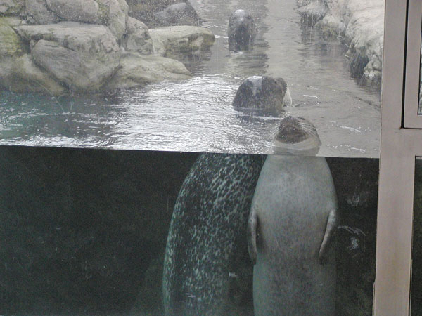 Seals at NE Aquarium